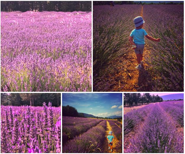 Blog pic - lavender